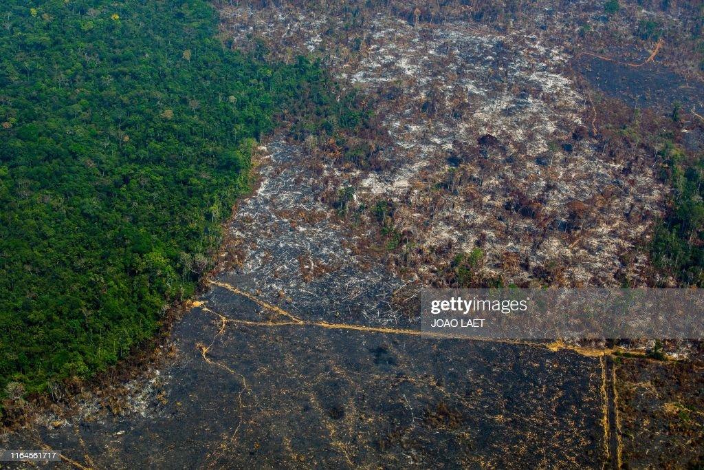 TOPSHOT-BRAZIL-DEFORESTATION-AMAZON : News Photo