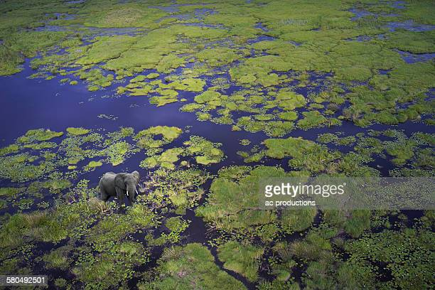Aerial view of elephant walking in remote river