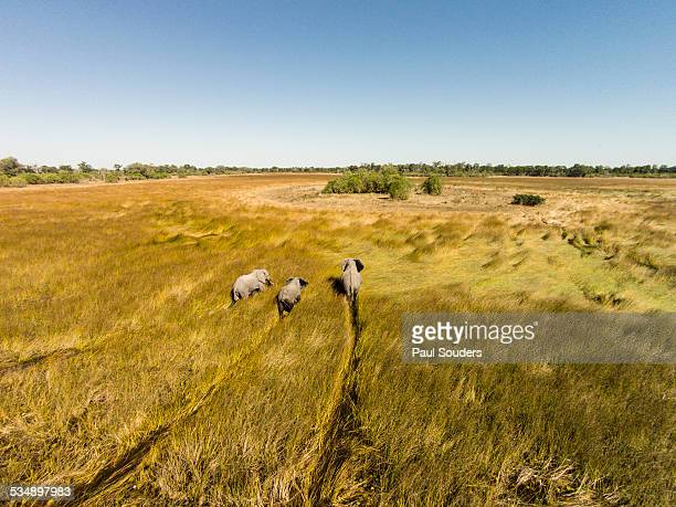 aerial view of elephants in marsh, botswana - botswana stock pictures, royalty-free photos & images