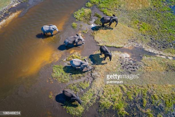 aerial view of elephants, okavango delta, botswana, africa - wildlife reserve stock pictures, royalty-free photos & images