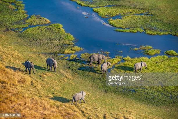 aerial view of elephants, okavango delta, botswana, africa - botswana stock pictures, royalty-free photos & images