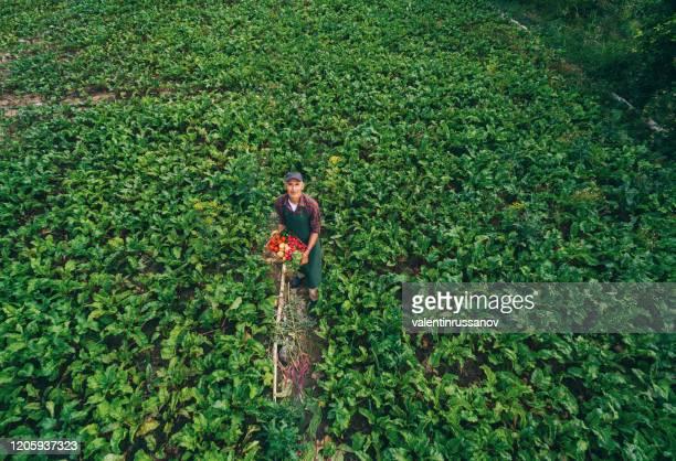 luchtmening van landbouwer in moestuin holdingmand met groenten - bulgarije stockfoto's en -beelden