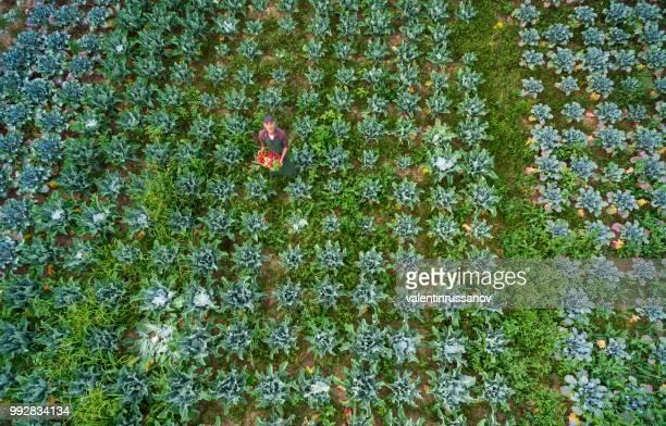 Aerial view of  farmer in vegetable garden