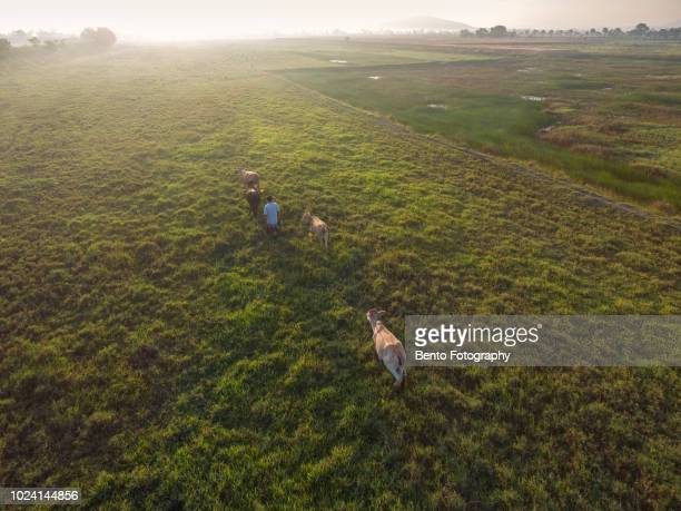 Aerial view of farmer on the field in the morning