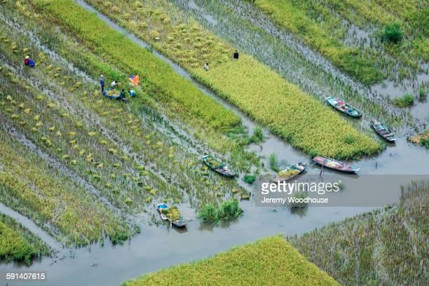 Aerial view of farmers in rural rice paddies