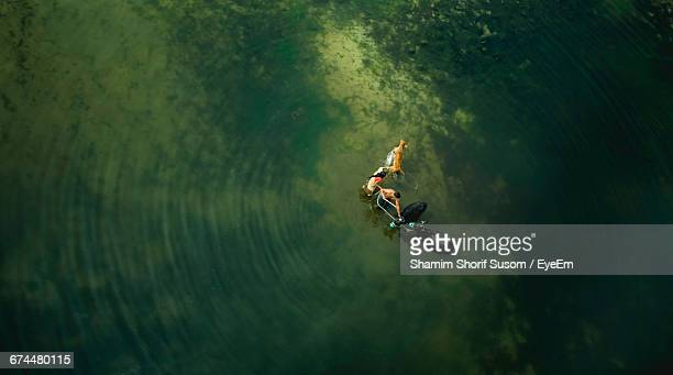 aerial view of farmers with animals in shallow water - flooding stock photos and pictures