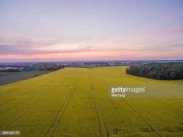 Aerial View of Field of Rapeseed