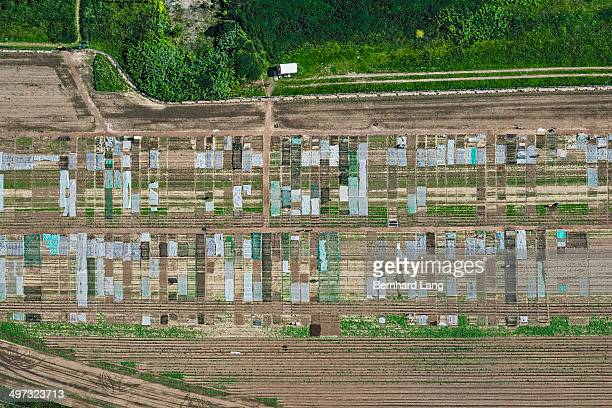 Aerial view of field with vegetable gardens