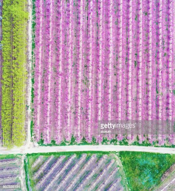 Vue aérienne de champs de pêchers et d'autres cultures au cours de la floraison au printemps, LLeida, Catalogne Espagne