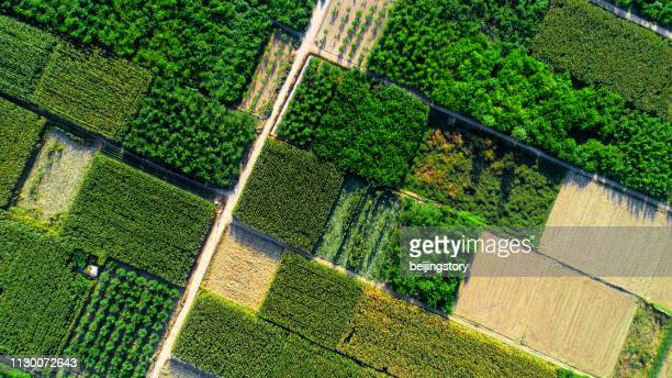 aerial view of fields - farm stock pictures, royalty-free photos & images