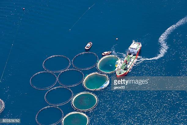 aerial view of fish farm - fishing industry stock pictures, royalty-free photos & images