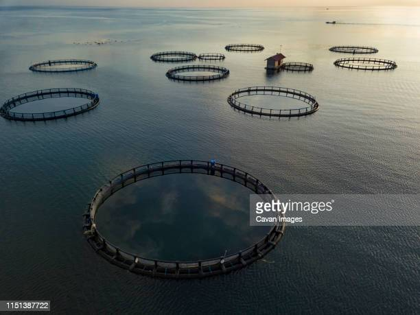 aerial view of fishing farm enclosures - aquaculture stock pictures, royalty-free photos & images