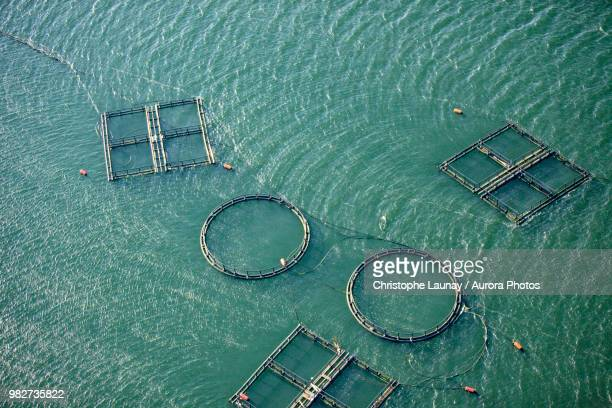 Aerial view of fishing farm enclosures, Sardinia, Italy