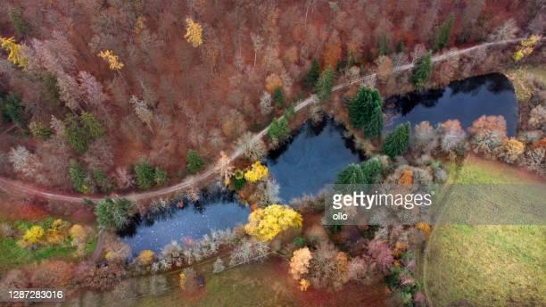 flygbild över fiskdamer - höstskog - barrväxter bildbanksfoton och bilder