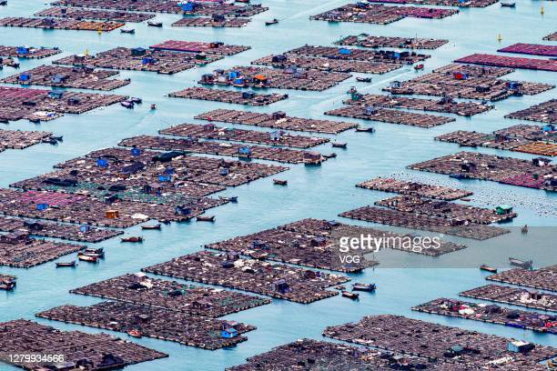 Aerial view of floating fish farms at Qida village on October 11, 2020 in Lianjiang County, Fujian Province of China.