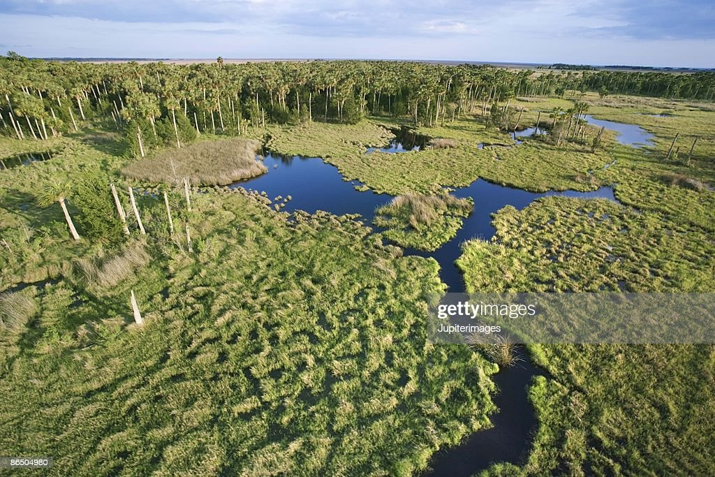 Aerial view of Florida Everglades : Stock Photo