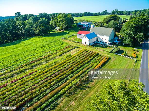 aerial view of flower farm - maryland us state foto e immagini stock