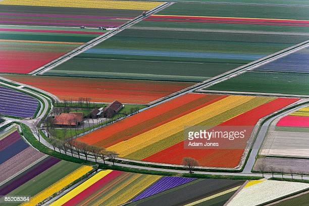 Aerial view of flower fields