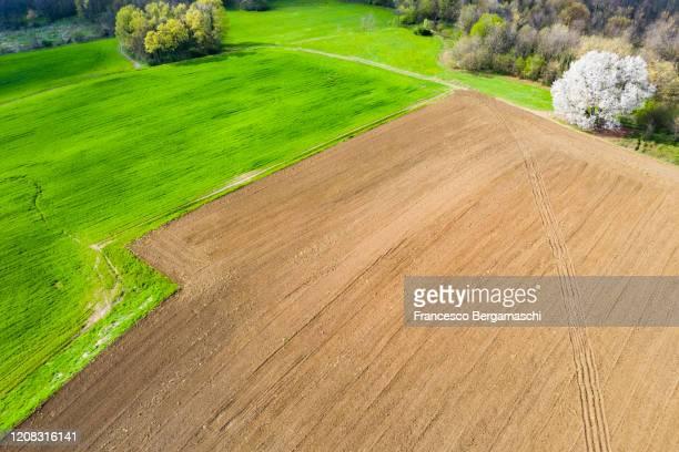 aerial view of flowering of wild cherry tree in the field. - italia stockfoto's en -beelden
