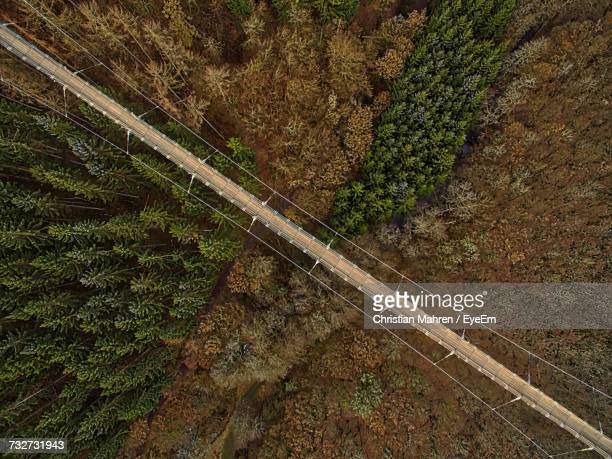 Aerial View Of Footbridge Over Forest