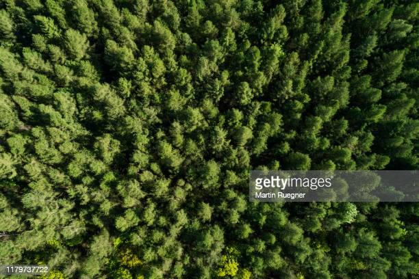 aerial view of forest in early springtime. mecklenburg-vorpommern, mecklenburg western pomerania, germany, europe. - floresta - fotografias e filmes do acervo