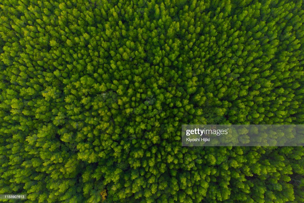 Aerial view of forest, Texture of mangrove forest  from above : Foto stock
