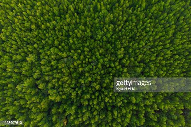 aerial view of forest, texture of mangrove forest  from above - vista cenital fotografías e imágenes de stock
