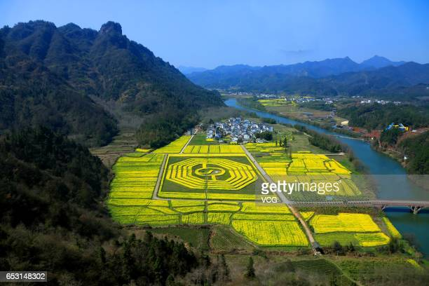 Aerial view of fully blossomed rape flowers forming a shape of Taiji graph at the foot of Mount Qiyun of Xiuning County on March 14 2017 in Huangshan...