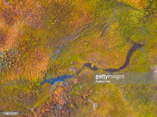 aerial view of grass growing on land - swamp stock pictures, royalty-free photos & images