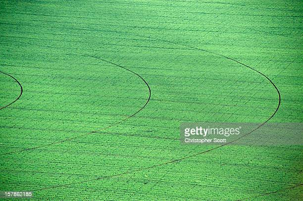 Aerial view of green field, Harare, Zimbabwe