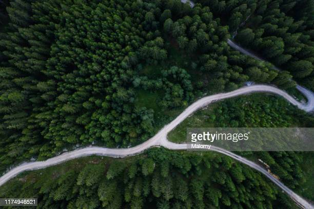 aerial view of green forest and winding path. drone view. directly above. - wildnisgebiets name stock-fotos und bilder