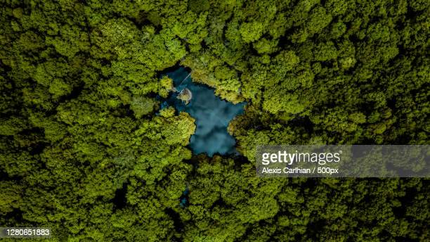 aerial view of green forest,france - forest stock pictures, royalty-free photos & images