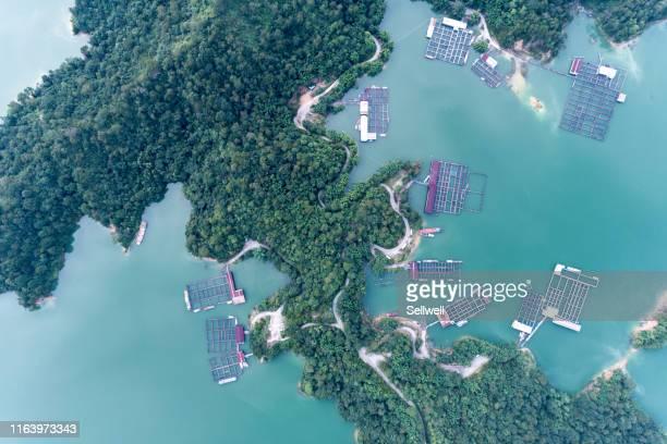 aerial view of green lake in china - província de guangdong - fotografias e filmes do acervo