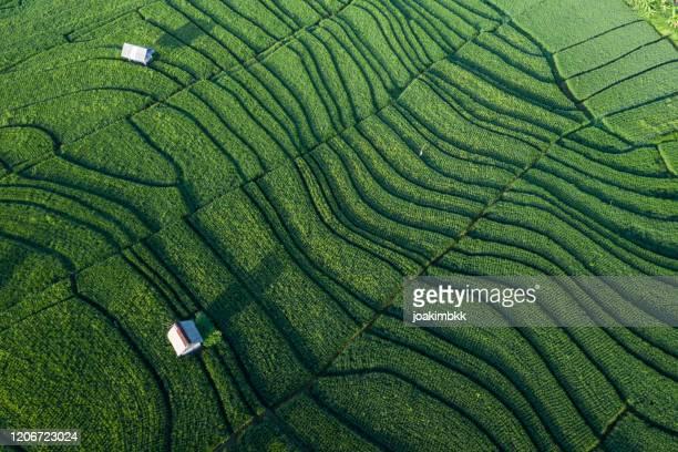 luchtmening van groene rijstrijstgebieden in bali - rice terrace stockfoto's en -beelden