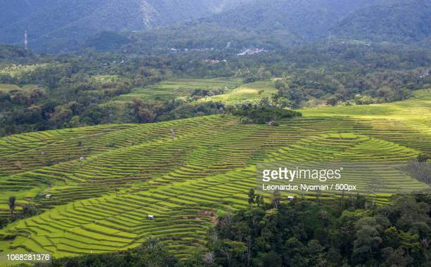 aerial view of green terraced fields - east nusa tenggara stock pictures, royalty-free photos & images