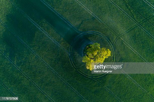 aerial view of green wheat field with trees near sunset with long shadow. mecklenburg-vorpommern, mecklenburg western pomerania, germany. - standing out from the crowd stock pictures, royalty-free photos & images