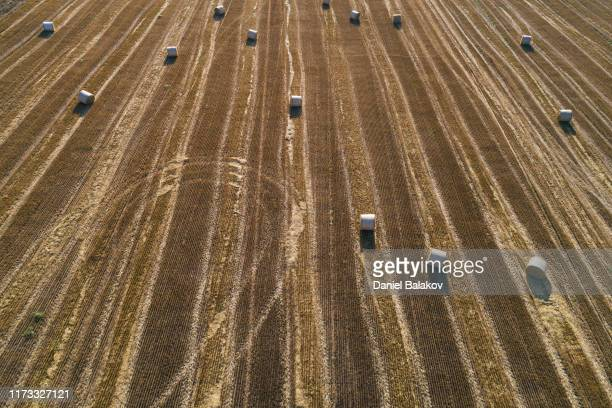aerial view of haystacks agricultiral field at sunset. summertime. agricultural equipment in cultivated land - harvest festival stock pictures, royalty-free photos & images