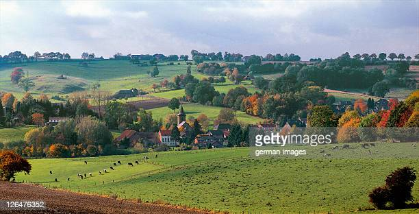 aerial view of herd of cows in field - オランダ リンブルフ州 ストックフォトと画像