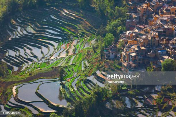 aerial view of historic indigenous village surrounded by rice terraces at yuanyang,yunnan province,china - yuanyang stock pictures, royalty-free photos & images
