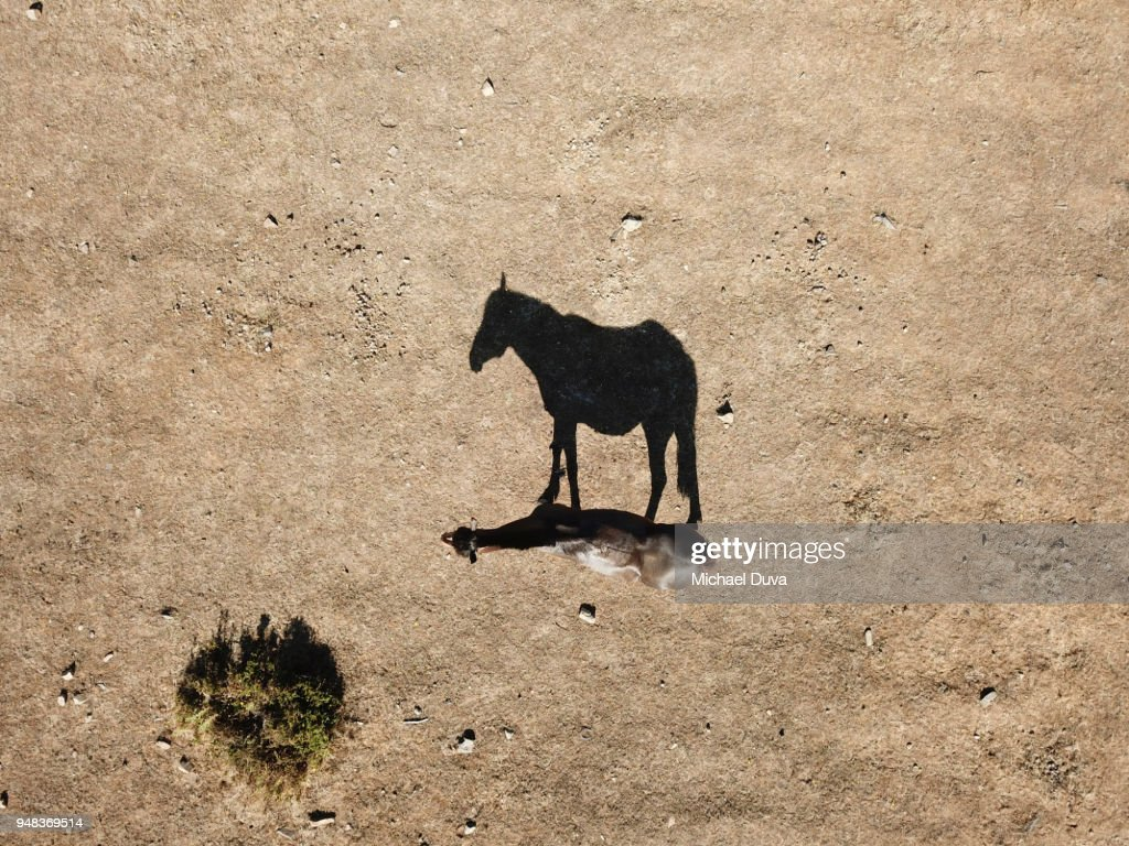 Aerial view of horse looking straight down with strong shadow : Stock Photo