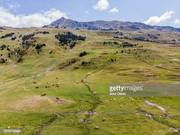 Aerial view of horses grazing in nature with stunning mountain view.