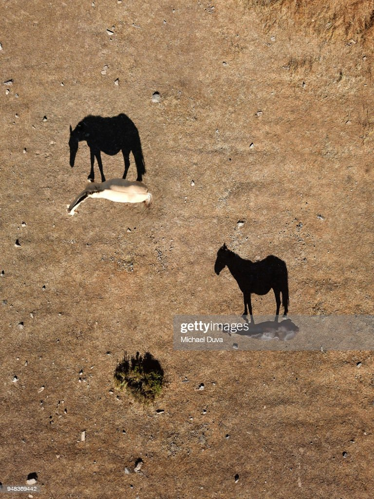 Aerial view of horses looking straight down with strong shadow : Stock Photo