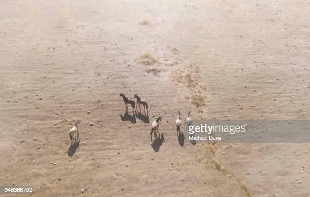 Aerial view of horses walking