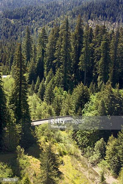 aerial view of humboldt woods state park, california - humboldt redwoods state park stock photos and pictures