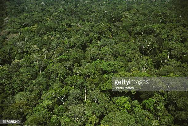 Aerial view of intact preserved dense forest with high biodiversity canopy trees Amazon rainforest Brazil