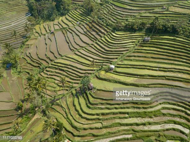Aerial view of Jatiluwih Rice Terrace in Bali Indonesia on August 15 2019 Jatiluwih is famous for its wellmaintained terraced rice fields and...