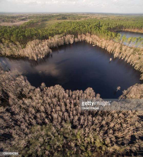 aerial view of lake amidst trees at pine log state forest - pine log state forest stock photos and pictures