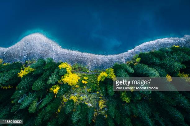 aerial view of lake shoreline and forest in autumn - purity stock pictures, royalty-free photos & images