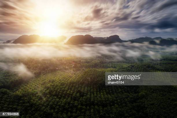 Aerial view of lanscape during sunrise with foggy and palm tree in beautyful place for travel in Thailand.
