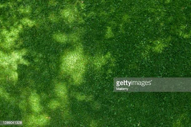 aerial view of lawn. directly above. drone view. - ansicht von oben stock-fotos und bilder